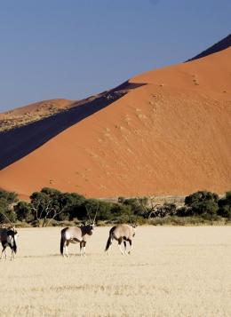 Charmes de Namibie : Namibie