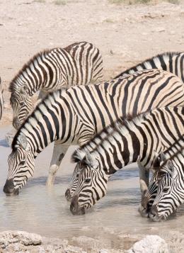 Du Namib aux Chutes Victoria : Namibie