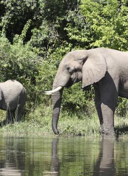 Volcans, Lacs et Gorilles d'Ouganda : Ouganda