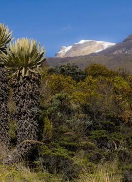 Trek des Andes à la Sierra Nevada : Colombie