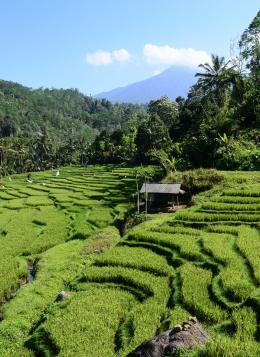 Bali, Balade sur l'Ile des Dieux : Indonésie