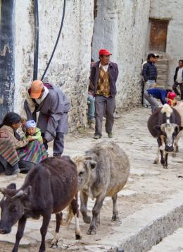 Couleurs du Mustang : Népal