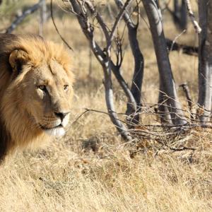 Voyages sur-mesure avec Tirawa : Botswana