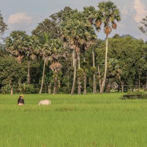 Voyages sur-mesure avec Tirawa : Cambodge