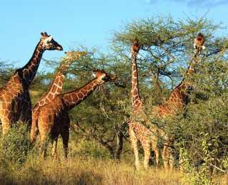Balade et Safari dans la Rift Valley : Kenya