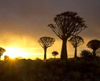 Kalahari, Fish River et Namib : Namibie