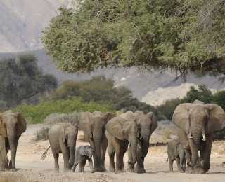 Exploration dans le Kaokoland : Namibie