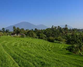 Rando et Bien-Etre à Bali avec Laurence Ameu : Indonésie