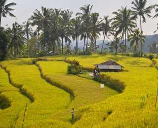 Charmes Balinais : Indonésie