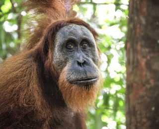 Trésors de Sumatra : Indonésie