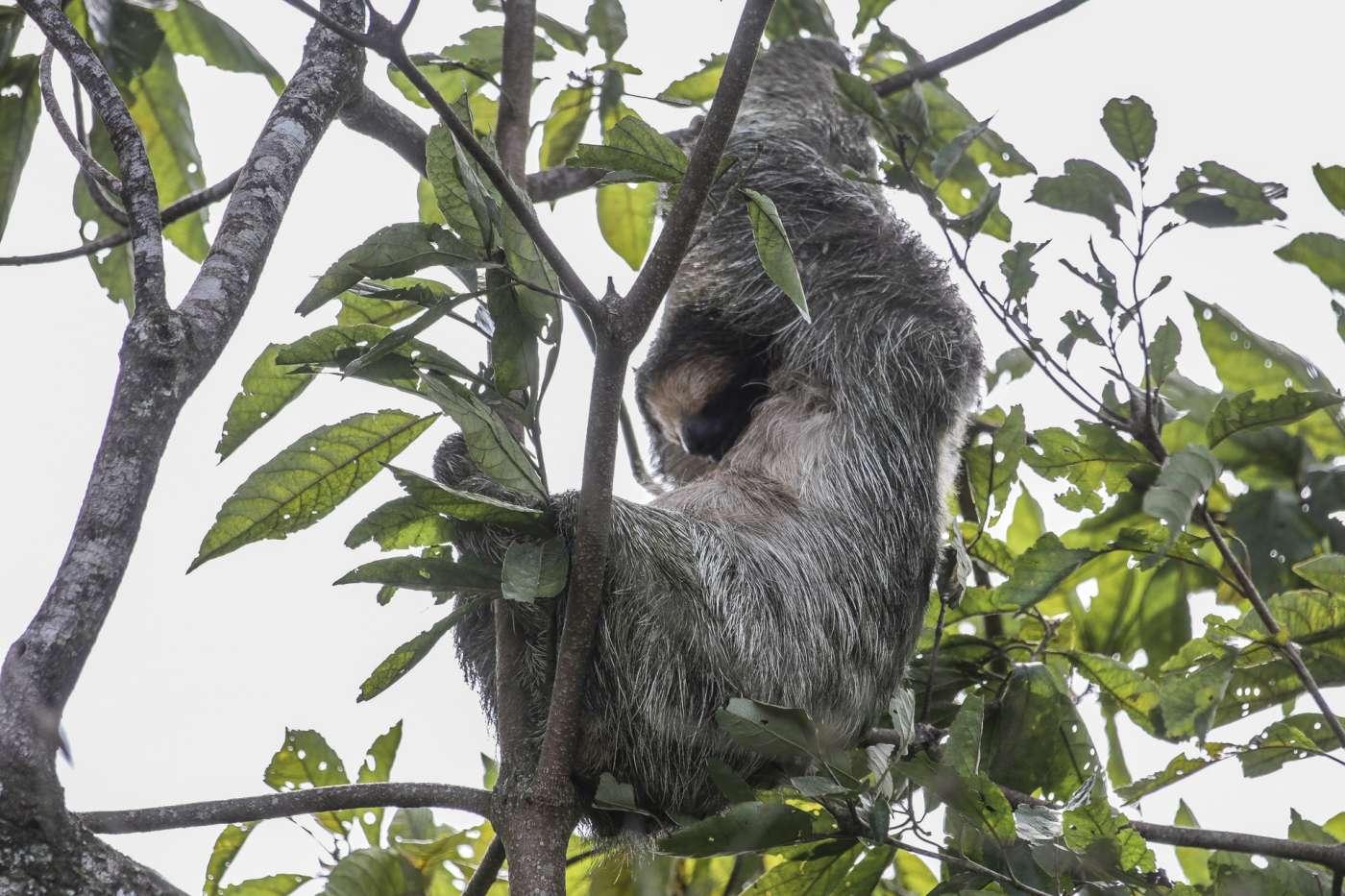 sites de rencontres en ligne au Costa Rica canulars de site de rencontre