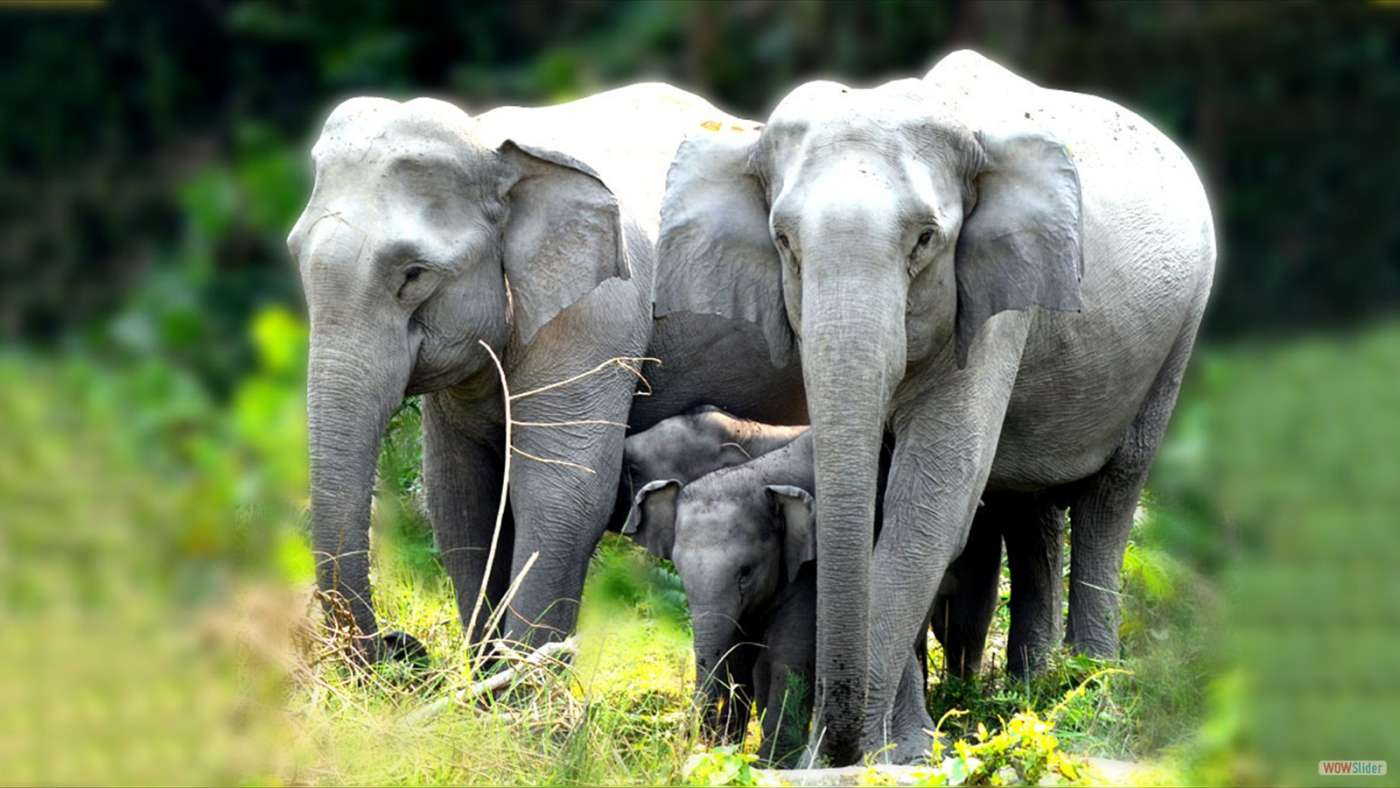 Elephant En Inde Signification voyage dans l'est indien, 7 sisters : visite de calcutta