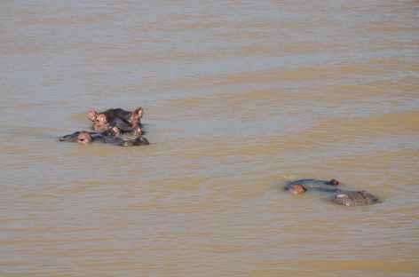 Croisière hippopotames dans le lac de Saint Lucia - Afrique du Sud -
