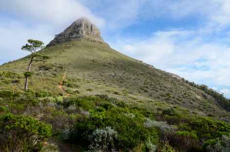 Montée à Lion's Head, sur les hauteurs du Cap - Afrique du Sud -