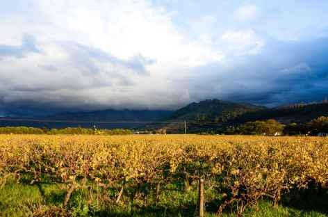 Découverte et dégustation des vins sud-africains -