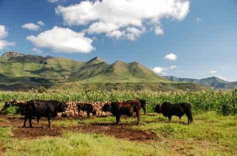 Montagnes de Maloti - Lesotho -