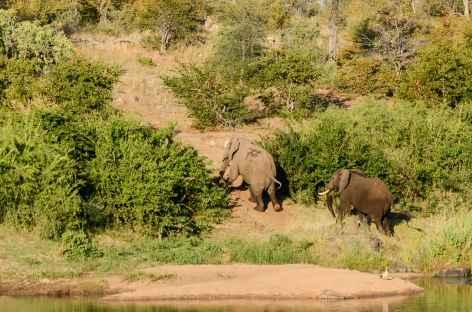 Eléphants, réserve d'Ebandla - Afrique du Sud -