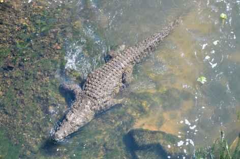 Crocodile, à la sortie du parc Kruger - Afrique du Sud -