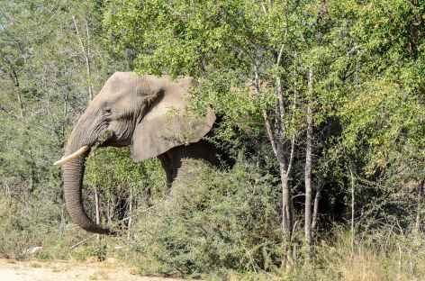Eléphant, parc Kruger - Afrique du Sud -