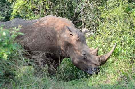 Rhinocéros, emblème de la Réserve de Hluhluwe-iMfolozi - Afrique du Sud -