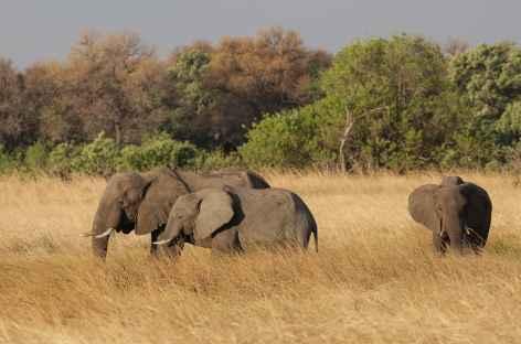 Eléphants, Réserve de Moremi - Botswana -