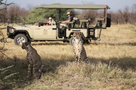 Guépards au cours de notre safari - Botswana -