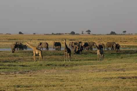 Eléphants et girafes, Parc national de Chobe - Botswana -
