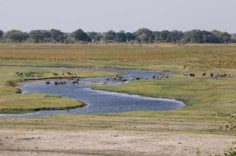 Rivière Chobe - Botswana -