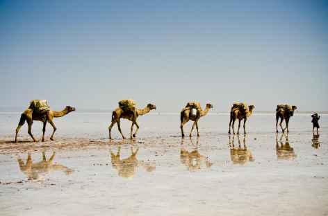 Caravanes de sel, dépression du Danakil -