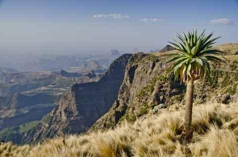 Montagnes du Simien, entre Sankaber et la cascade de Jinbar - Ethiopie -