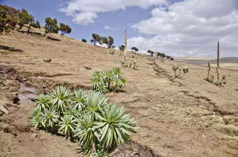 Vers le village de Geech, massif du Simien - Ethiopie -