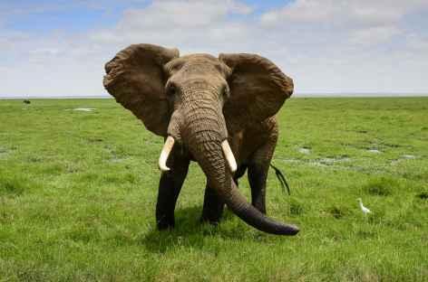 Eléphant dans le Parc national d'Amboseli - Kenya -