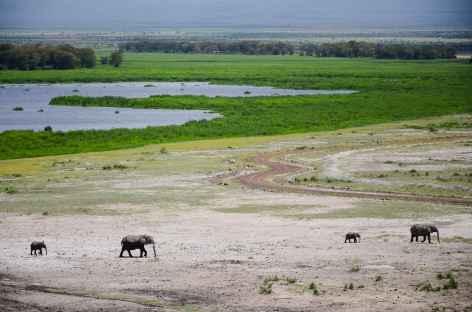 Eléphants dans le parc d'Amboseli - Kenya -