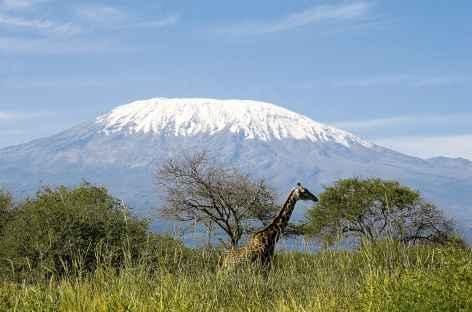 Le Kilimanjaro depuis le parc d'Amboseli - Kenya -
