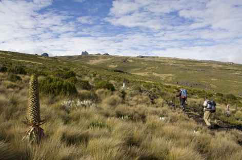 Montée par le voie Sirimon, Mont Kenya - Kenya -