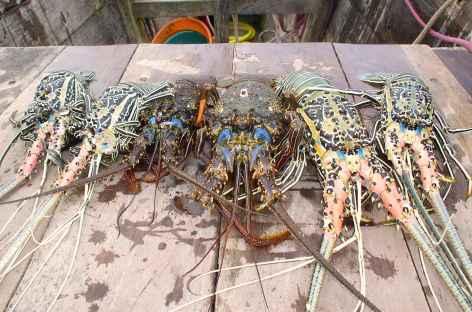 Pêche à la langouste... - Madagascar -