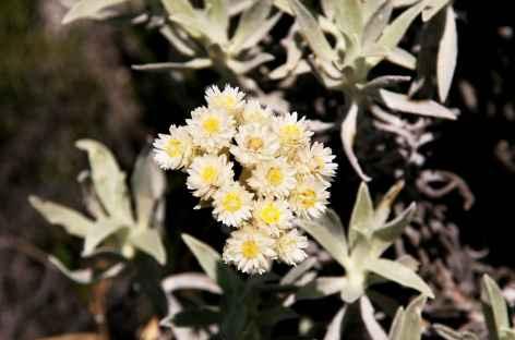 Flore d'altitude dans le massif de l'Andringitra - Madagascar -