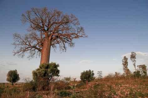 Pays Bara entre Ranohira et Tuléar - Madagascar -