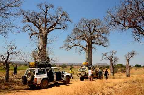 Piste et baobabs entre Beroroha et Ranohira - Madagascar -