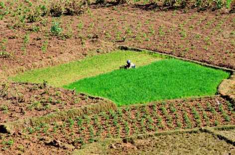 Les Hautes terres, une région agricole prospère - Madagascar -