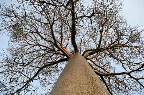 Baobab Ranohira et Tuléar - Madagascar -