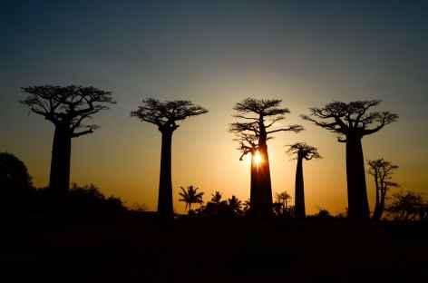 Coucher de soleil sur l'Allée des Baobabs - Madagascar -