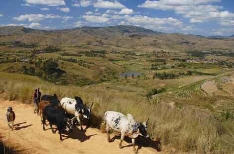 Campagne betsileo vers Fianarantsoa - Madagascar -