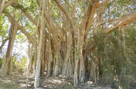 Vers Andavadoaka - Madagascar -