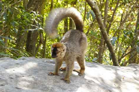 Lémurien dans le Parc national de l'Isalo - Madagascar -