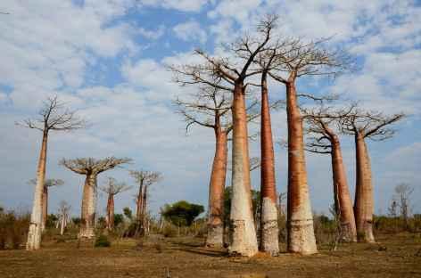 L'ouest de Madagascar, pays des baobabs - Madagascar -