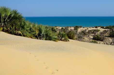 Dunes côtière, Parc national de Kirindy Mite - Madagascar -