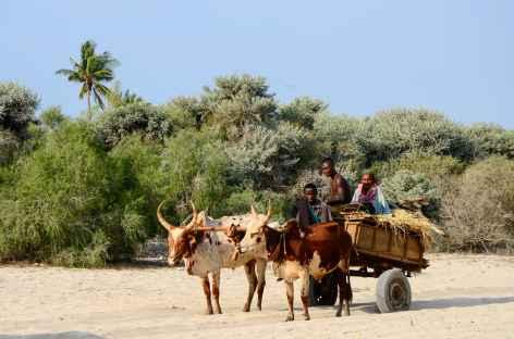 Scène de vie sur la côte Ouest de Madagascar -