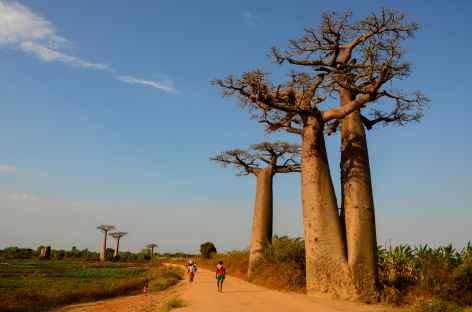 Allée des Baobabs - Madagascar -