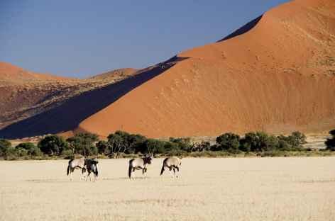 Oryx dans le désert du Namib - Namibie -